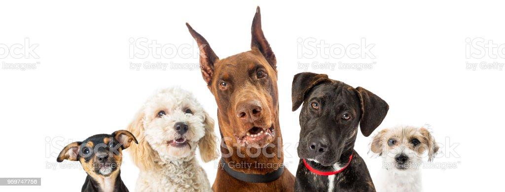 各種大小的狗特寫網頁橫幅 - 免版稅一群動物圖庫照片