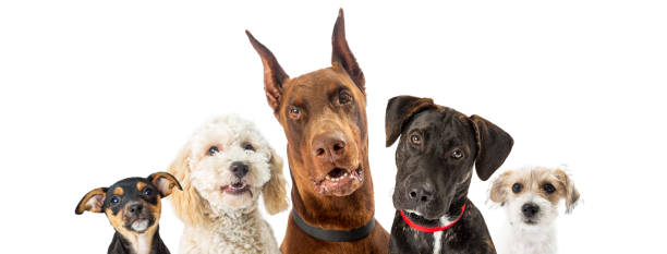 dogs of various sizes close-up web banner - dog stock photos and pictures
