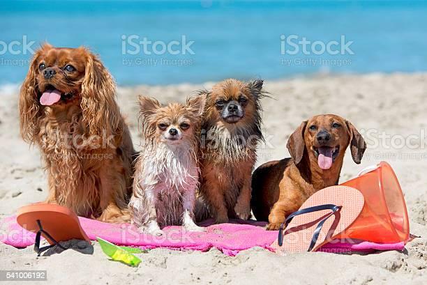 Dogs on beach picture id541006192?b=1&k=6&m=541006192&s=612x612&h=nunadqdv36tswxku1oubfbvrwwi3juodfllk9y1dm8g=