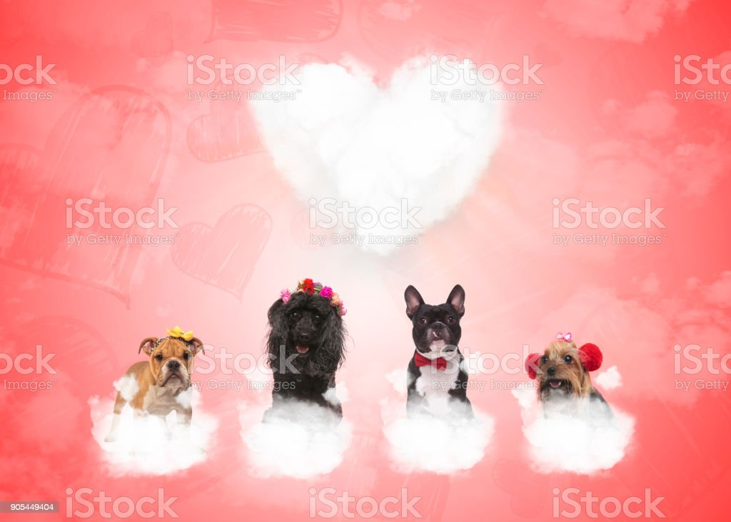 dogs on puffy clouds with big heart in the background stock photo
