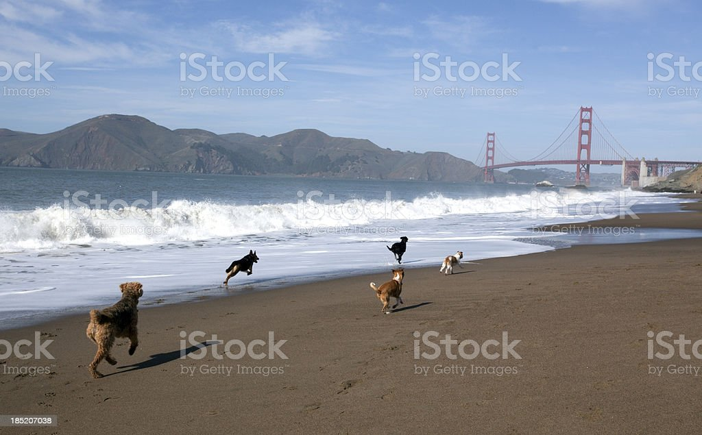 Dogs on the Run royalty-free stock photo