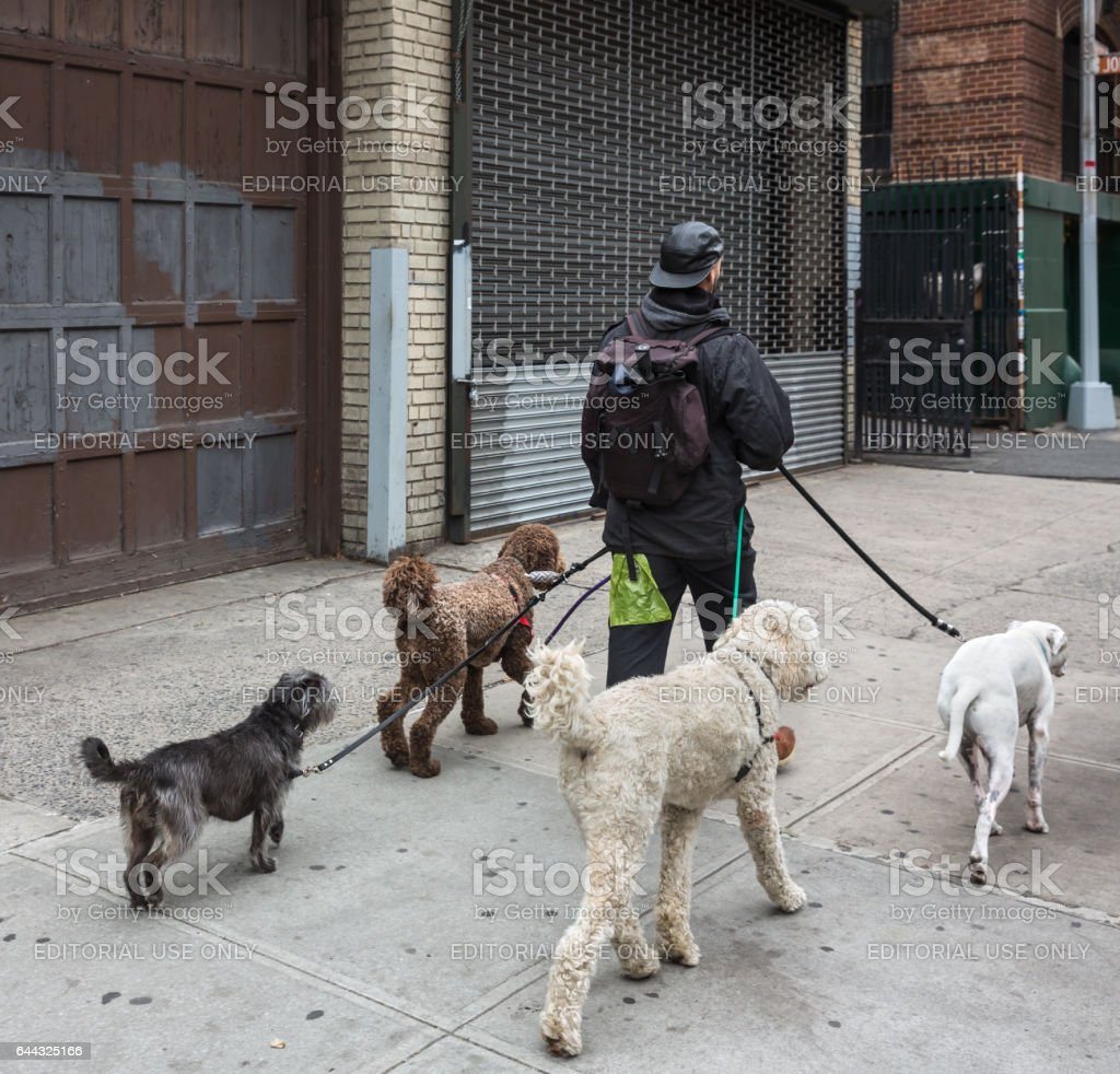 Dogs on the streets of NYC stock photo