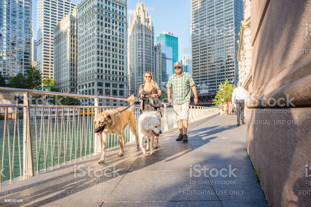 Dogs out for a walk along Riverwalk in Chicago stock photo