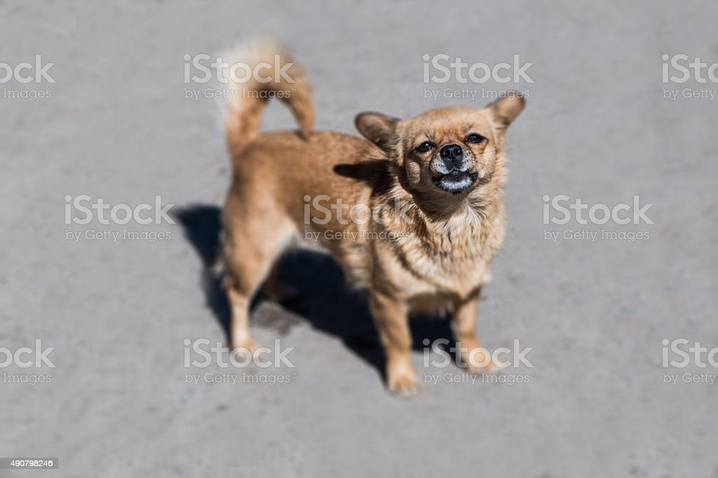 Dogs Outdoor stock photo