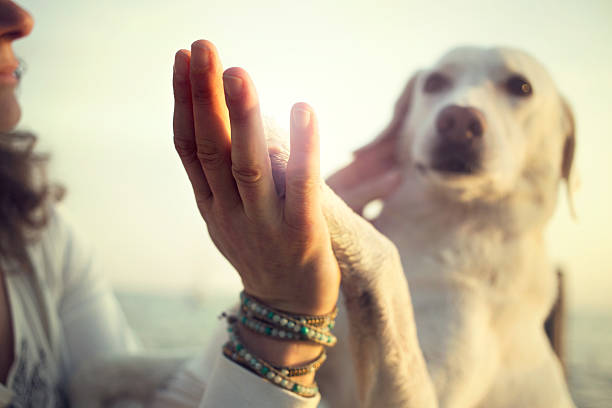 Dog's paw and man's hand gesture of friendship stock photo