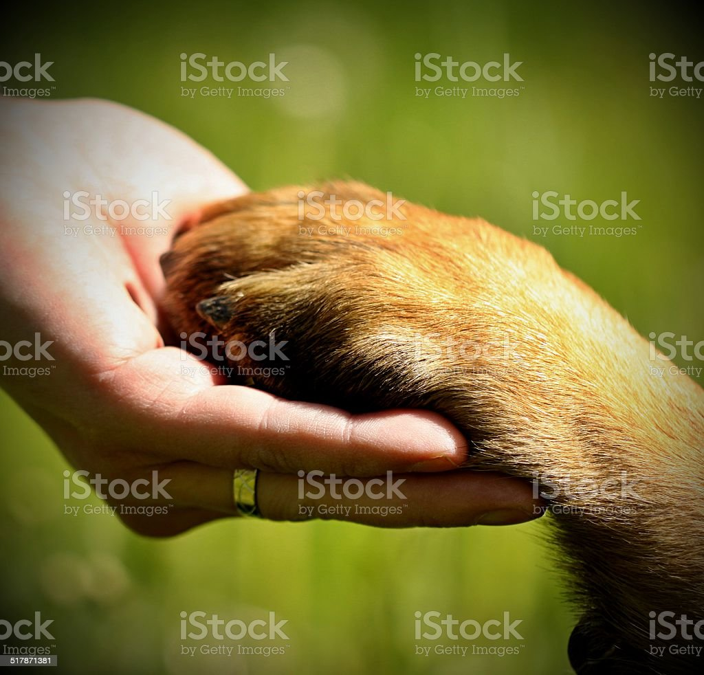 Dog´s paw and man´s hand stock photo
