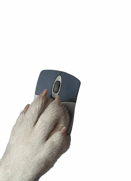 Dogs paw on mouse stock photo