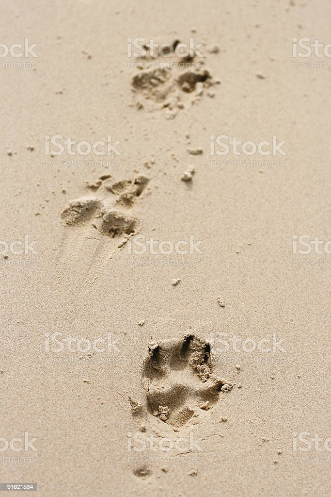 Dog's paw prints in sand stock photo
