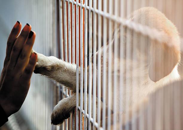 Dogs people connection adoption picture id480499744?b=1&k=6&m=480499744&s=612x612&w=0&h=rpvk7ha8mqxyszwj8p0eiulmiezzli3opuzbihmp4uq=