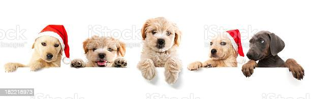 Dogs picture id182218973?b=1&k=6&m=182218973&s=612x612&h=7xn6j6hjjxpqtfbr5koqrxkzqtbh1jzzyti9gzdfxe4=