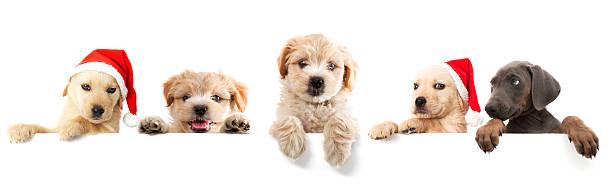 Dogs picture id182218973?b=1&k=6&m=182218973&s=612x612&w=0&h=dgupkzwpadrk3adqy45pwi2rdejko02lb6hl2ivalau=