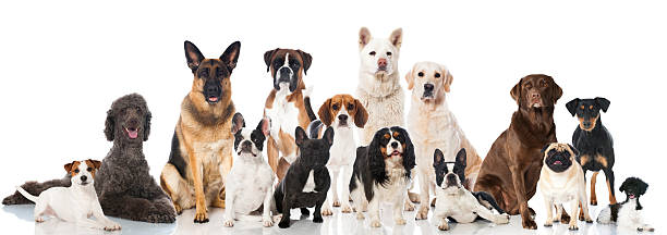dogs - group of objects stock pictures, royalty-free photos & images