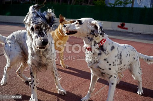 Dogs playing in the park