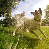 Happy looking dogs playing in water on a hot summer day