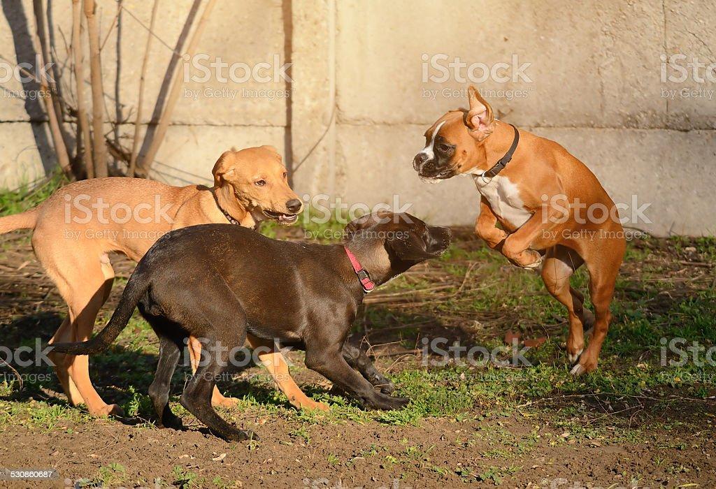 Dogs portrait stock photo