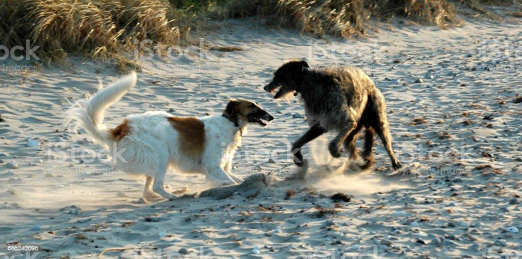 Dogs race around stock photo