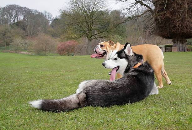 Dogs relaxing in the park stock photo
