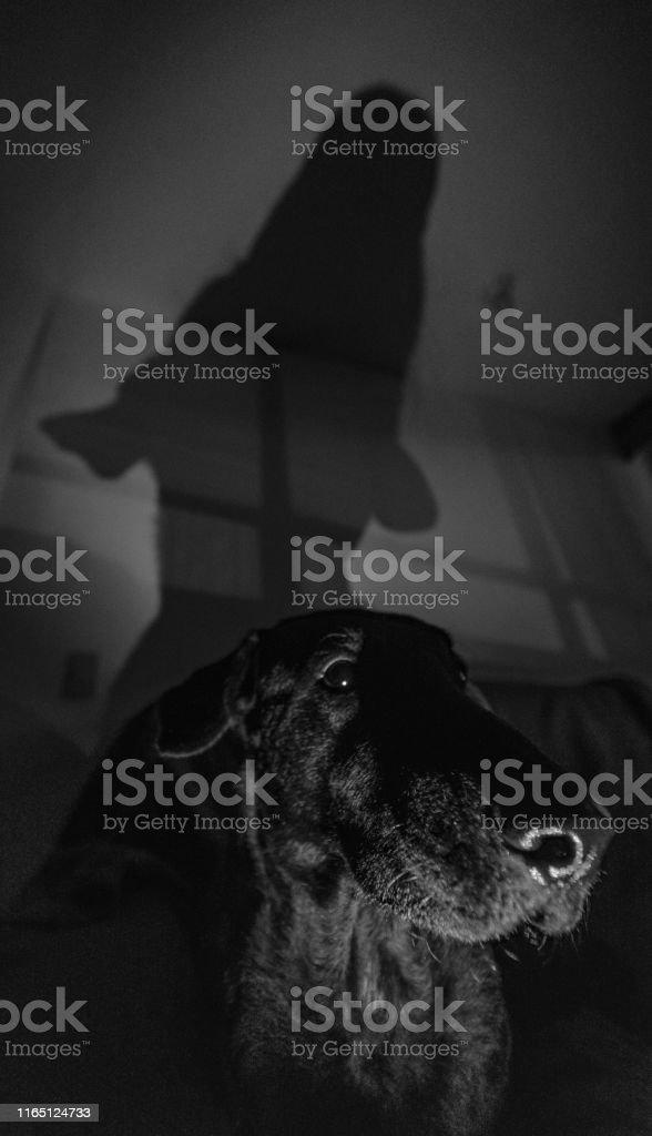 Dog on the sofa.