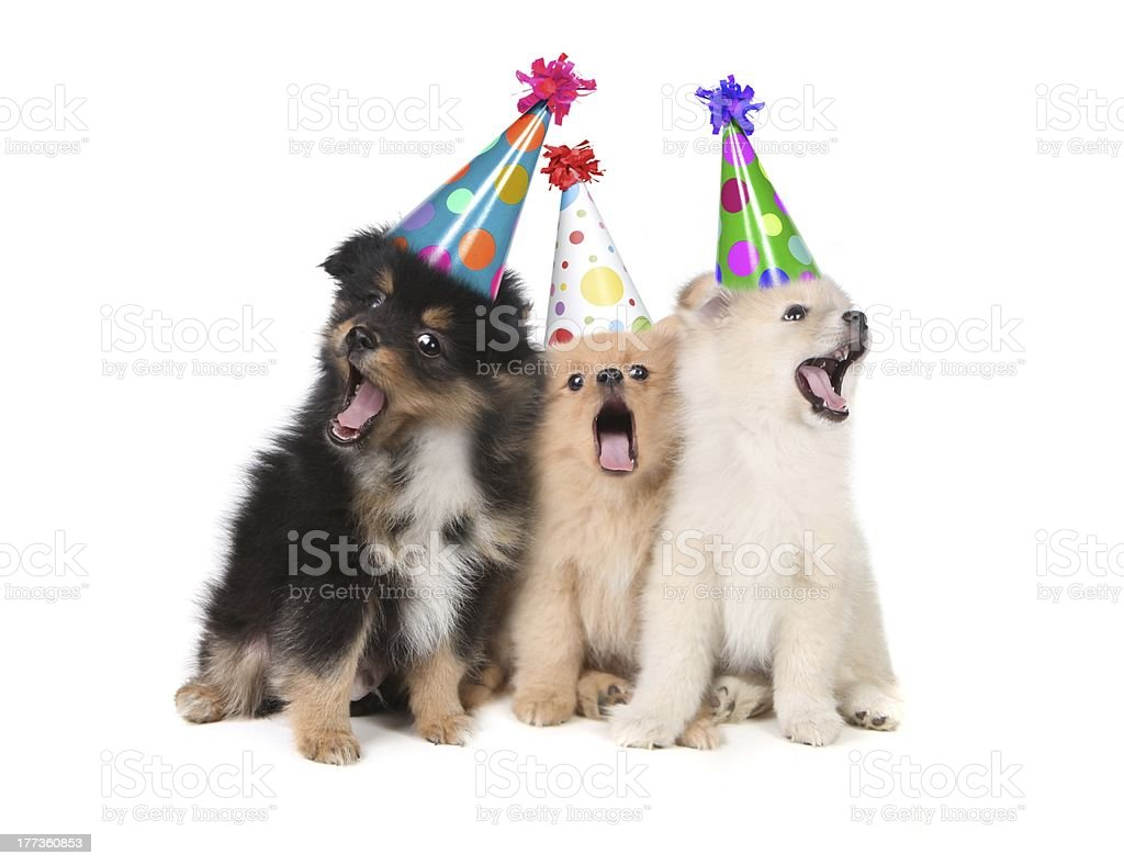 Hunde Singen Happy Birthday Party Hute Tragen Stockfoto Und Mehr