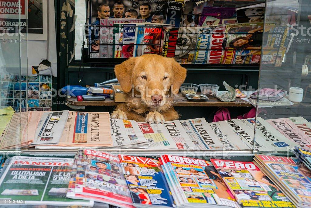 Dogs. Venetian dog runs newsagency stall. stock photo