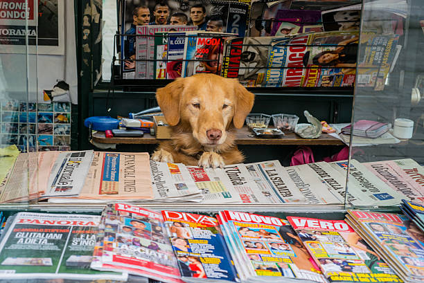 Dogs. Venetian dog runs newsagency stall. Dogs. Venetian dog runs newsagency stall. news stand stock pictures, royalty-free photos & images