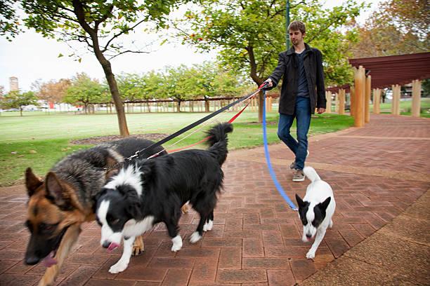Dogs walk in the park picture id525363128?b=1&k=6&m=525363128&s=612x612&w=0&h=h3ynb4xa6gcocxcgeyzt2cw tnle3tovva mafjiju8=