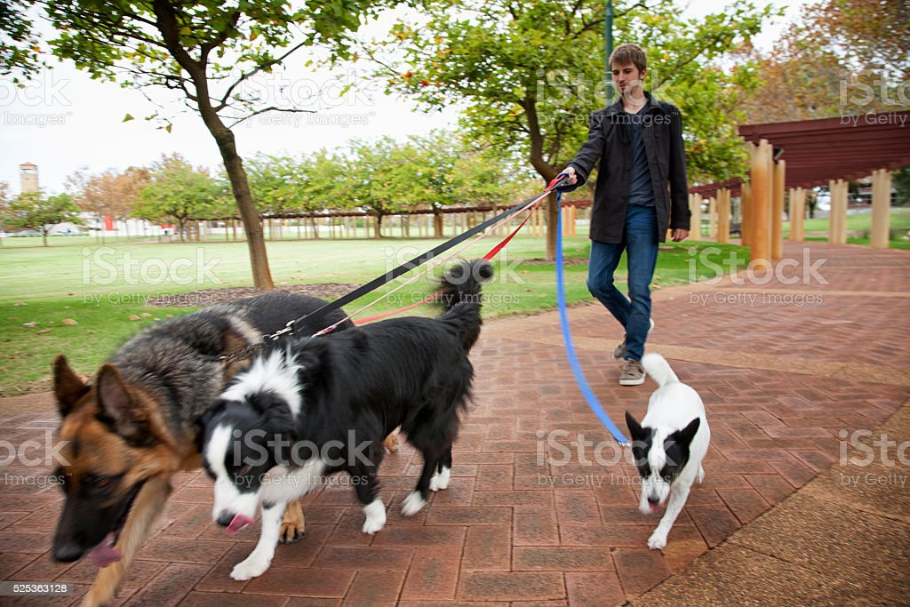 Dogs Walk In The Park stock photo