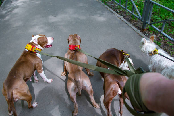 Dogs walking in park in collars on leashes picture id969210934?b=1&k=6&m=969210934&s=612x612&w=0&h=7xcgpkfld7lmzcomgunr2pgkuk7h8posi2olqyfwiwy=