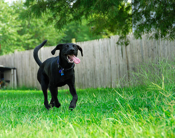 Dogs Wanna Have Fun stock photo
