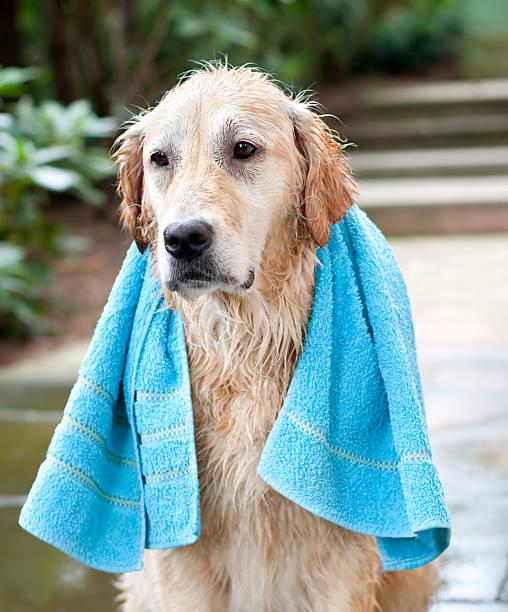 Dogs Washing Day stock photo