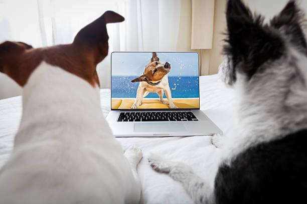 Dogs watching a movie picture id519454919?b=1&k=6&m=519454919&s=612x612&w=0&h=ahuokibfbbd4jqsr18yvz128jflvetvt2fgd7svpwcs=