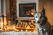 Do enjoy in lazy winer day in front of fire in fireplace