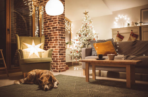 Dogs winter day Dog enjoy in lazy winter day in living room christmas interior stock pictures, royalty-free photos & images