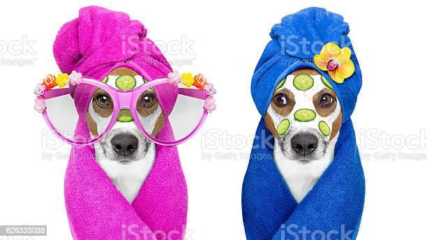 Dogs with a beauty mask wellness spa picture id626333038?b=1&k=6&m=626333038&s=612x612&h=kgpffbczszmaqlyxdxfoiwtgn gaszj1lf4x5ewjgcy=
