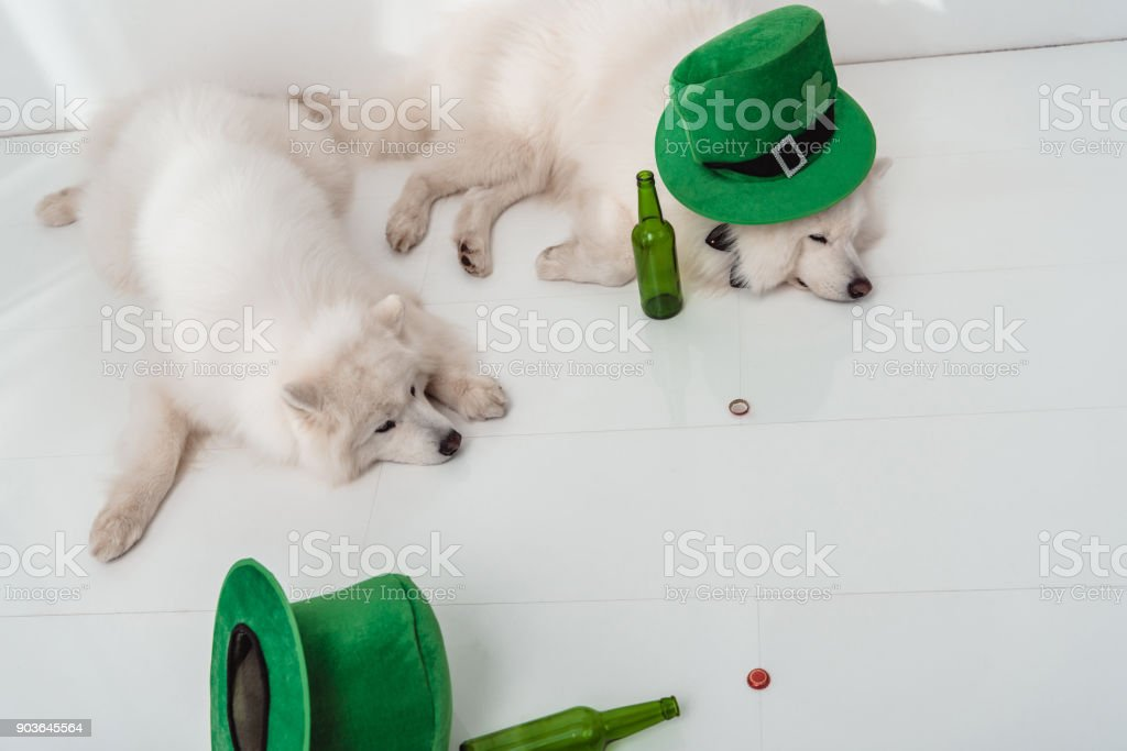 dogs with green hats and beer bottles stock photo
