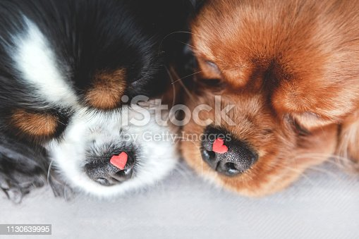 Two cute dogs with hearts on their noses