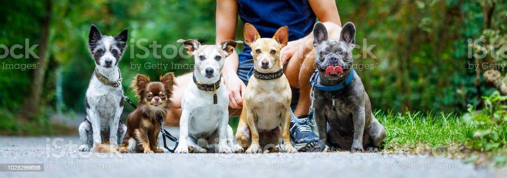 Hunde mit Leine und Eigentümer bereit, spazieren gehen – Foto