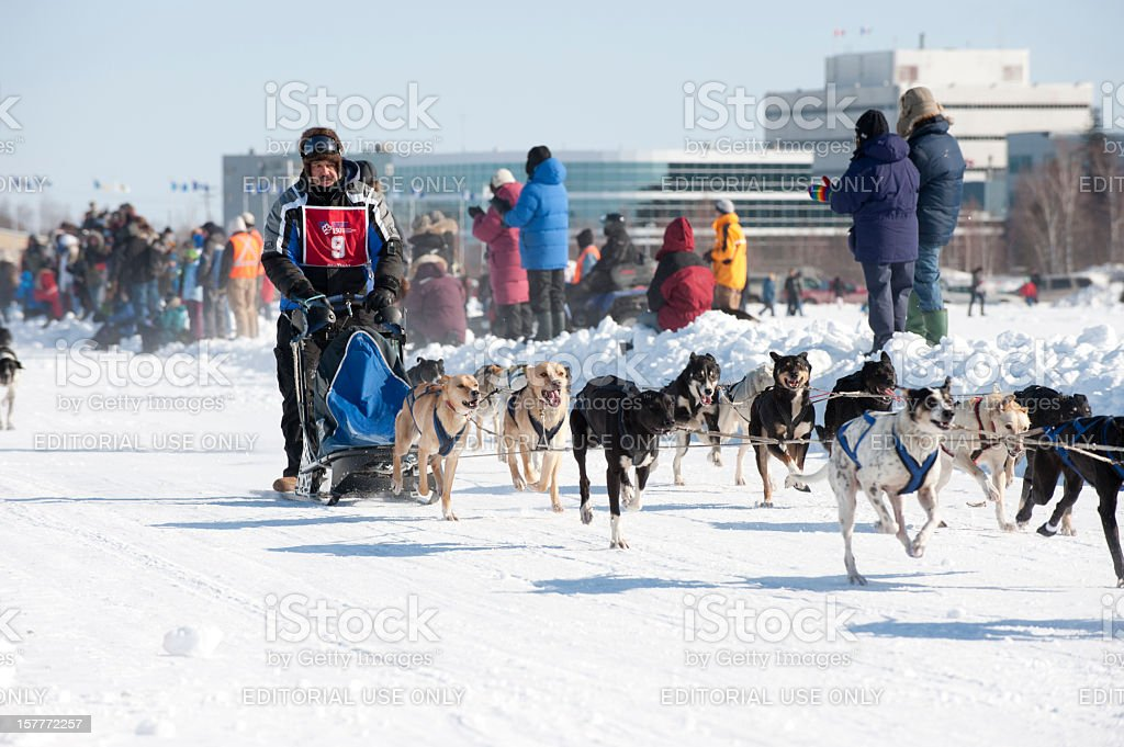 Dogsled Racing stock photo