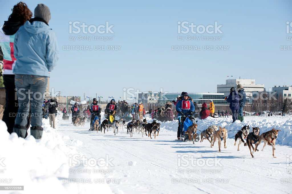 Dogsled Racing royalty-free stock photo
