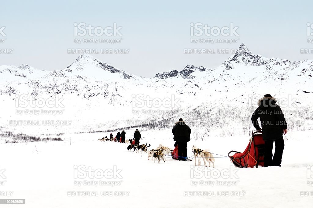 Dogsledding in Norway stock photo