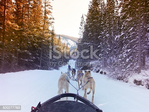 istock Dogsledding in the Canadian Rocky Mountains 520277763