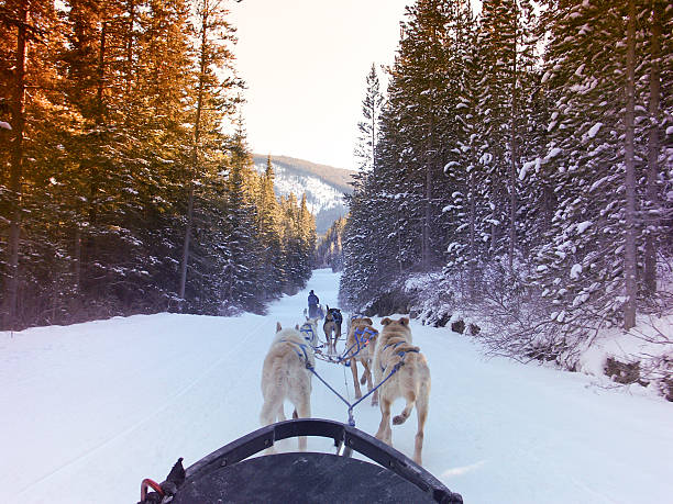 Dogsledding in the Canadian Rocky Mountains Musher and sled dogs in Kananaskis Country, Alberta, Canada. kananaskis country stock pictures, royalty-free photos & images