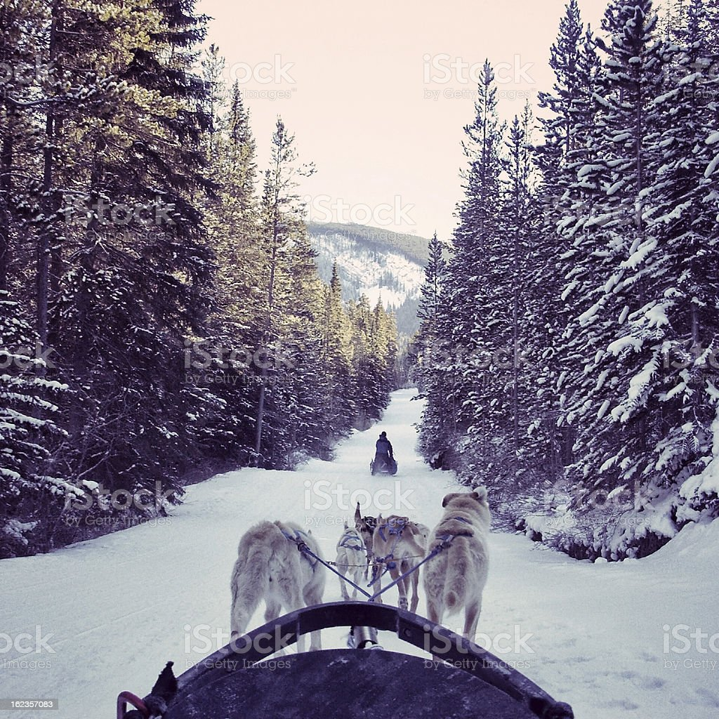 Dogsledding in the snow in the Canadian Rocky Mountains royalty-free stock photo
