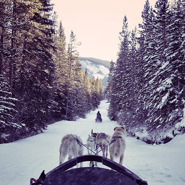 Dogsledding in the snow in the Canadian Rocky Mountains stock photo