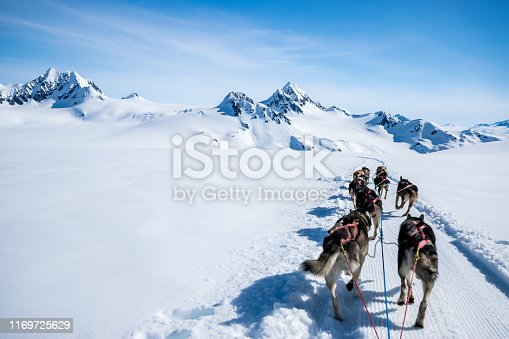 Dogsledding on a snowcapped mountain of Alaska on a sunny day of June.