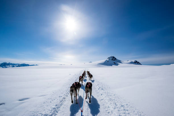 Dogsledding on the mountain Dogsledding on mountain top under a clear sky with a rare sun halo. sled dog stock pictures, royalty-free photos & images