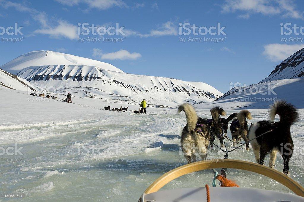 Dogsledding stock photo