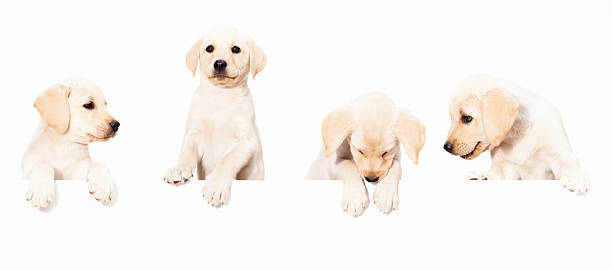 Dogs/Puppy Banner stock photo