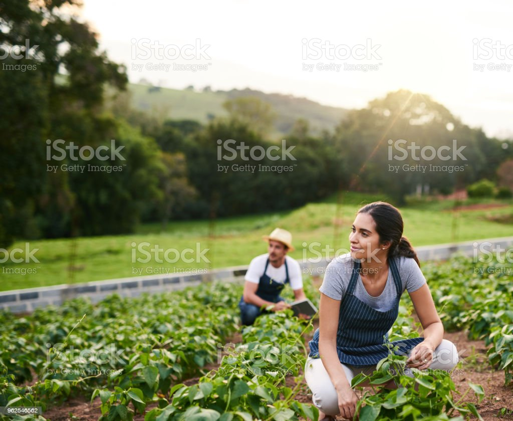 Doing their part - Royalty-free Adult Stock Photo