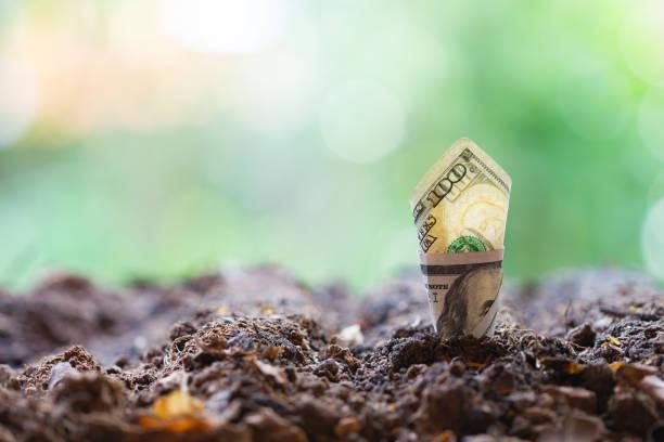 Dollar Bill Pflanzenwachstum aus Boden. Konzept der Geldbaum wächst aus US-Dollar – Foto